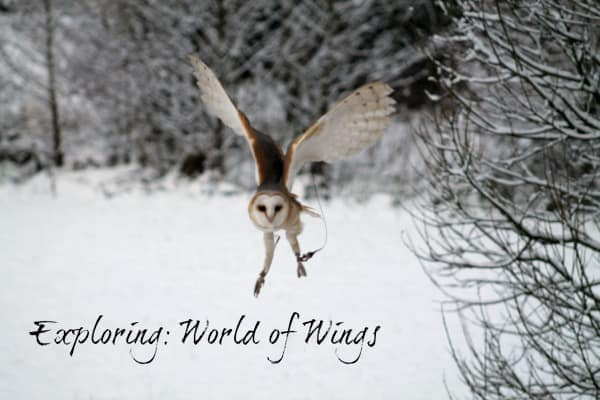 Exploring: World of Wings